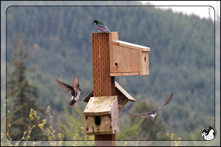 Ridgetop Farm and Garden | Birds of 2013 | Week 17 |