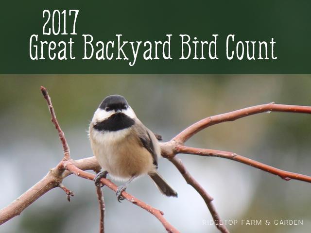 Ridgetop Farm and Garden   2017 Great Backyard Bird Count   GBBC