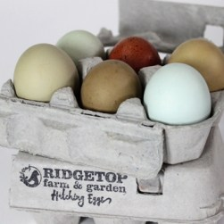 RFG - hatching eggs - olive2