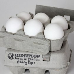 RFG - hatching eggs - white leghorn1