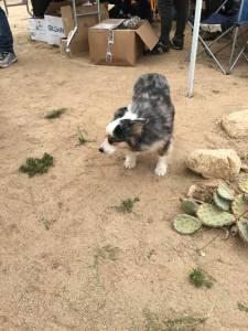 desert-dog