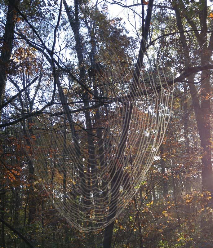 Cobweb-1001