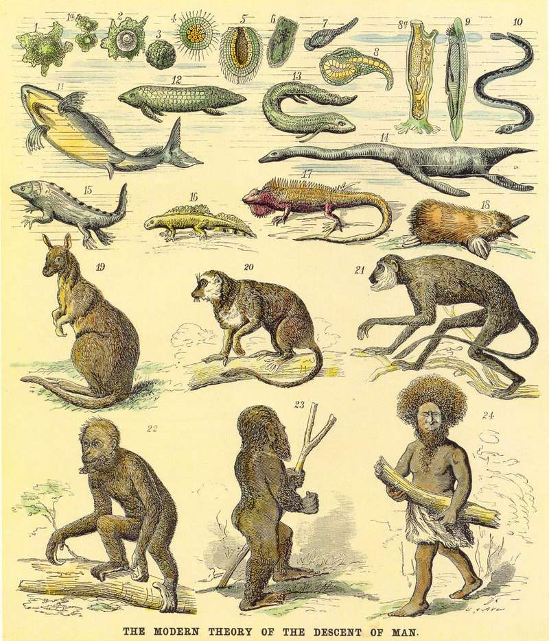 Theory of the Descent of Man - Darwin's Theories of Evolution