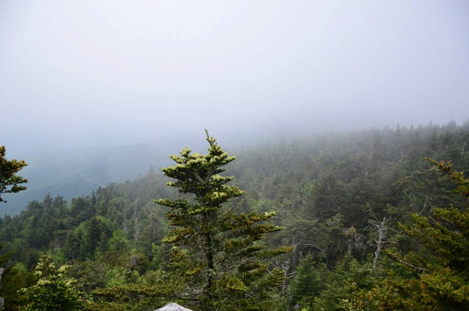 Foggy view from the top