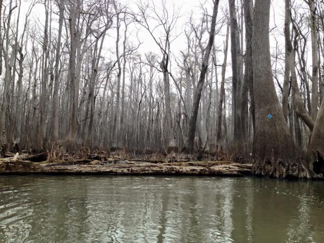 Kayaking Bayou DeView Water Trail