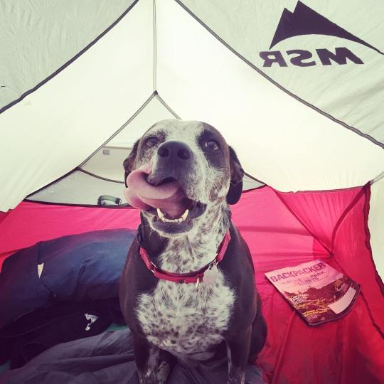 My dog, Caddie, like the tent much butter.
