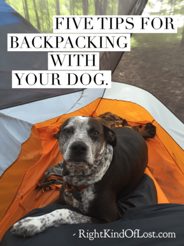 Five tips for a better backpacking dog experience. Your dog will thank you.