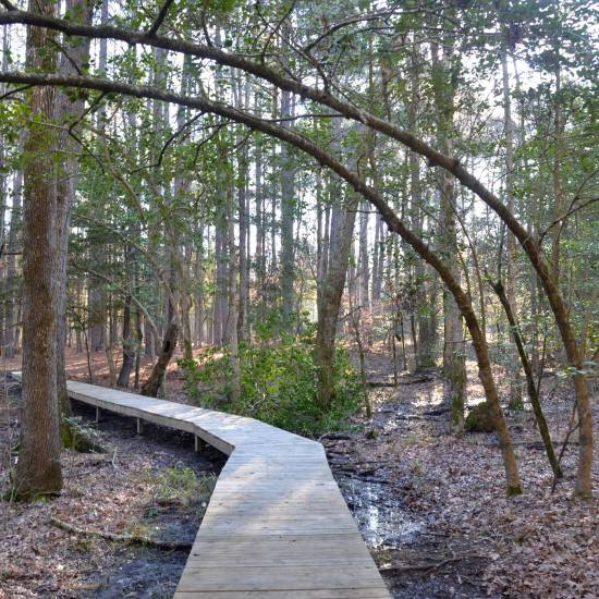The Coastal Plain Trail at White Oak Lake State Park in South Arkansas is a treasure. It showcase the unique terrain of the Gulf Coastal Plain.