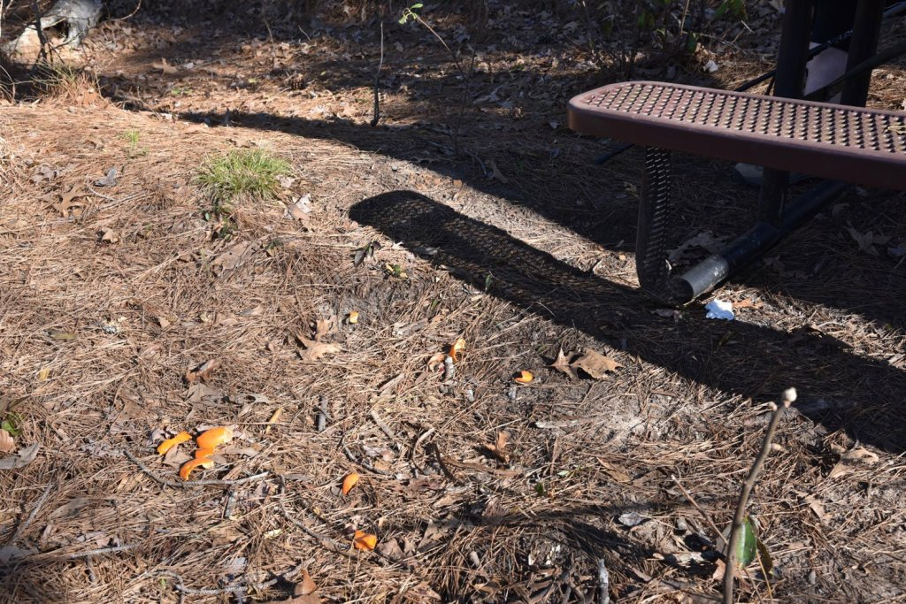 Orange peels on the ground near a picnic table is not good Leave No Trace Principle 3 practices