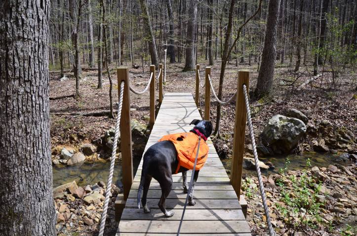 A bridge crosses a small stream on the Ouachita Trail