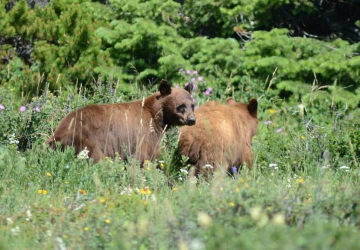 Leave No Trace Principle 6 – Respect Wildlife