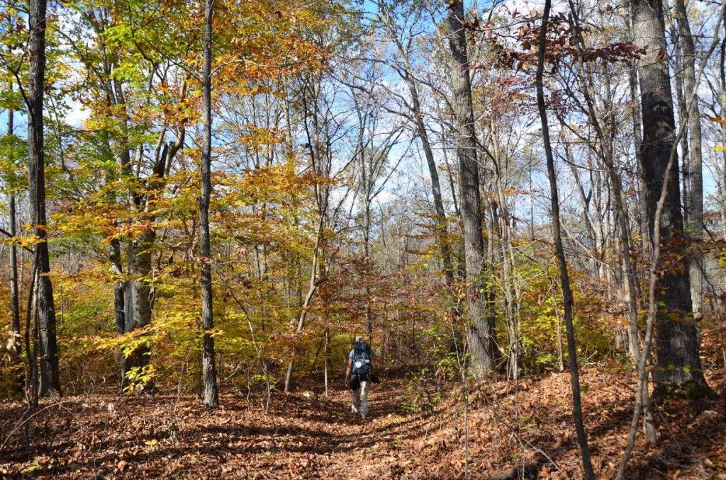 A hiker makes her way down the Buffalo River Trail.
