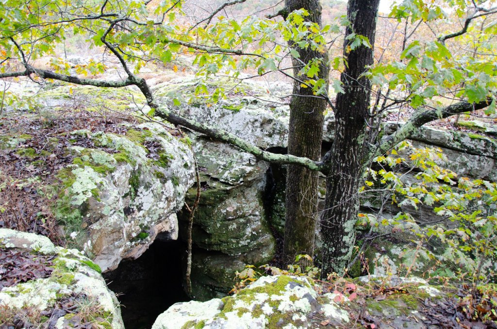 Trees grow through the cracks along the trail in the Ozark National Forest, Arkansas