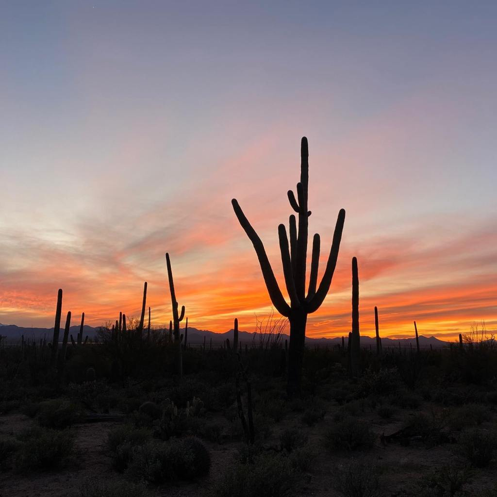 The sun sets behind a saguaro