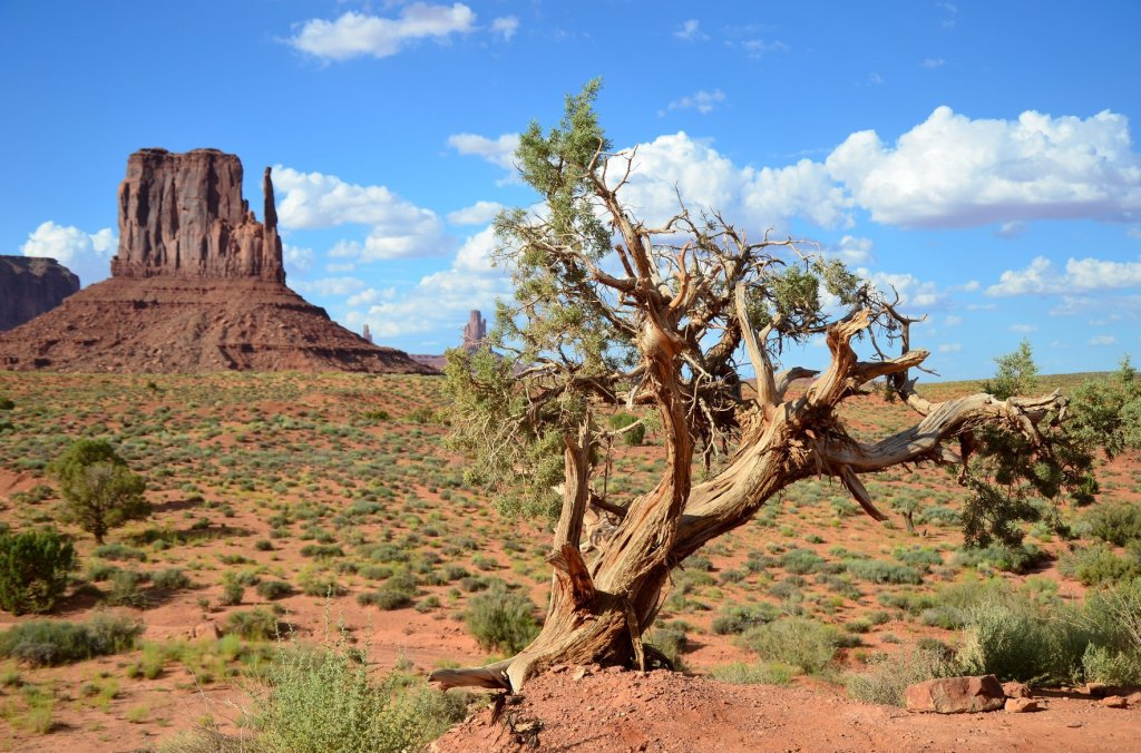 10 tips for hiking and camping in arid enviornments