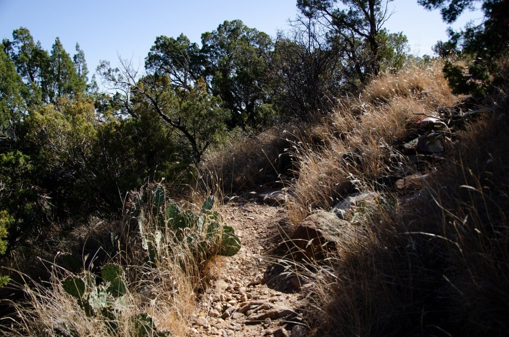 Grass at Caprock Canyons State Park is shown