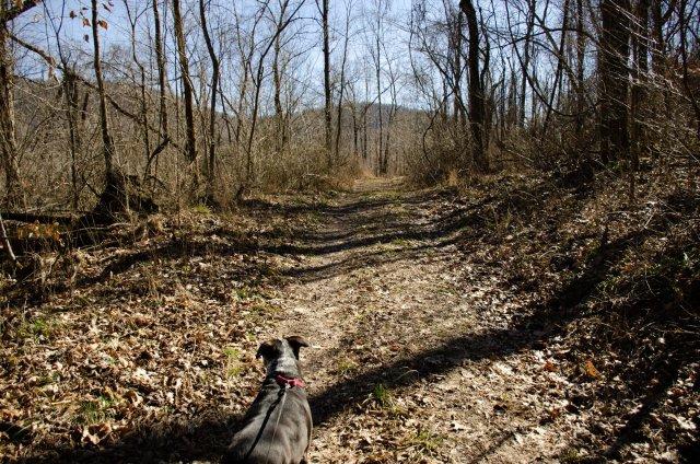 Hiking at Smith Creek Preserve
