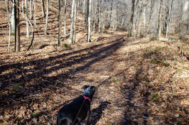 Caddie hikes along Smith Creek Preserve
