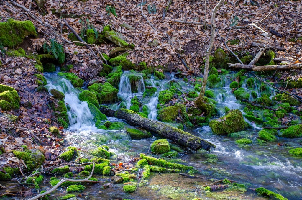 Smith Creek Preserve in the Ozarks is a great place for finding secret outdoor spaces
