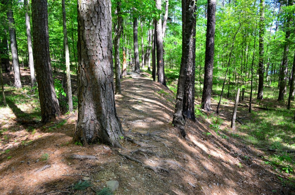 An old railroad bed taken over by trees is shown