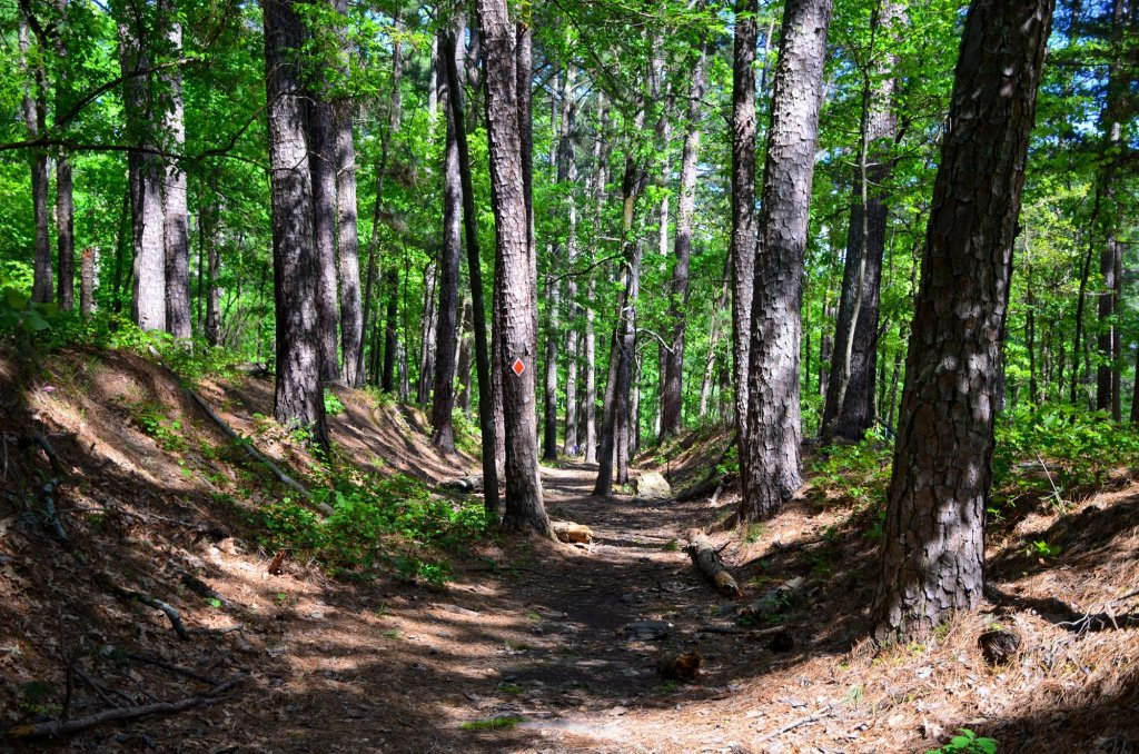 The trail follows ruts on the Saginaw Historic Trail while hiking at DeGray Lake State Park