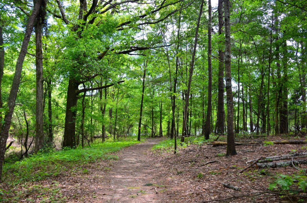 Hiking along a wide path at DeGray Lake State Park
