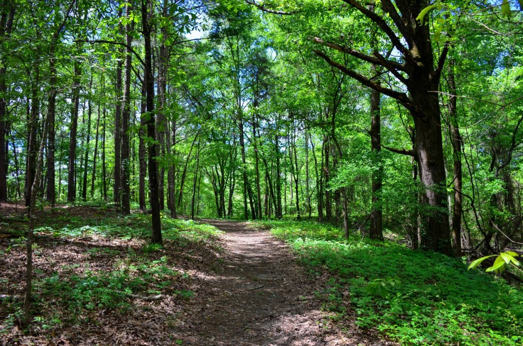 The trail at shown while hiking at DeGray Lake State Park