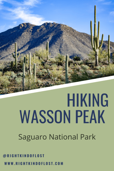 Hiking to the top of Wasson Peak, the highest peak in Saguaro National Park's West District, is a great way to see all the diversity of the park.