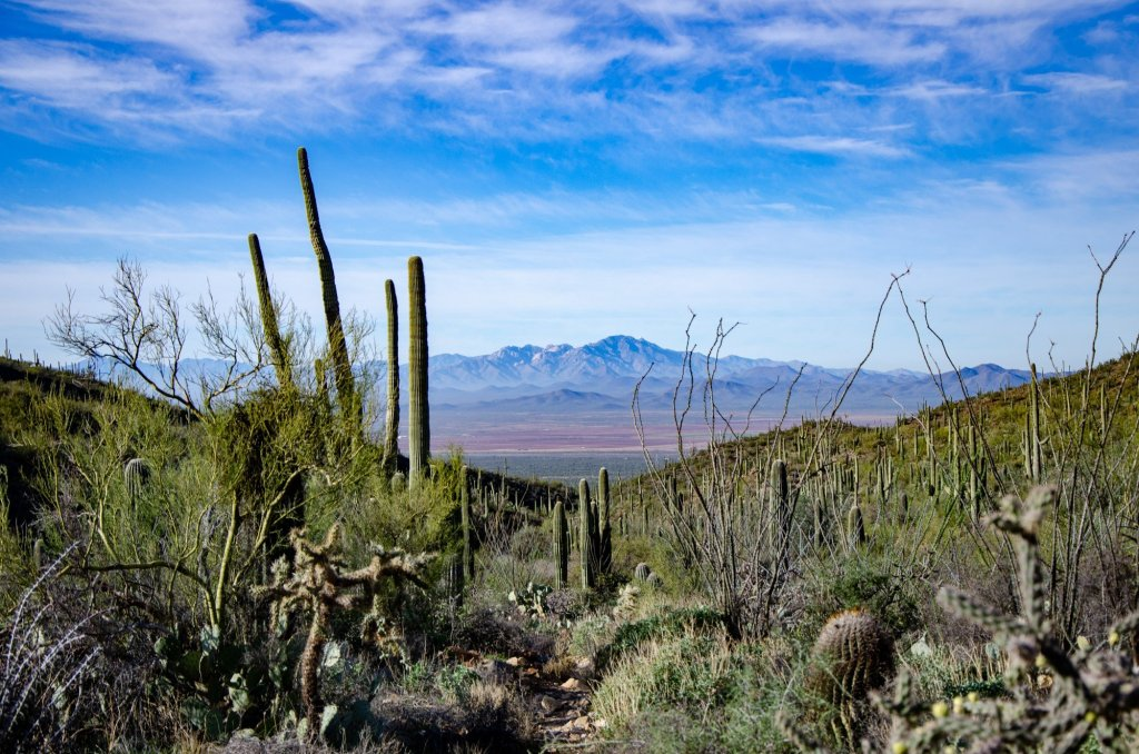 Mountains are shown in the distance behind cacti