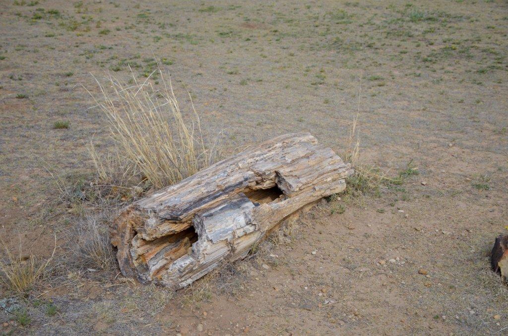 A petrified log is shown at Black Mesa State Park