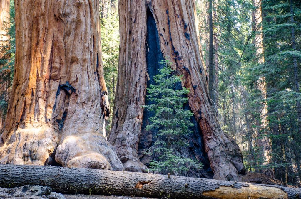 Hiking the General Sherman Tree and Congress Trail