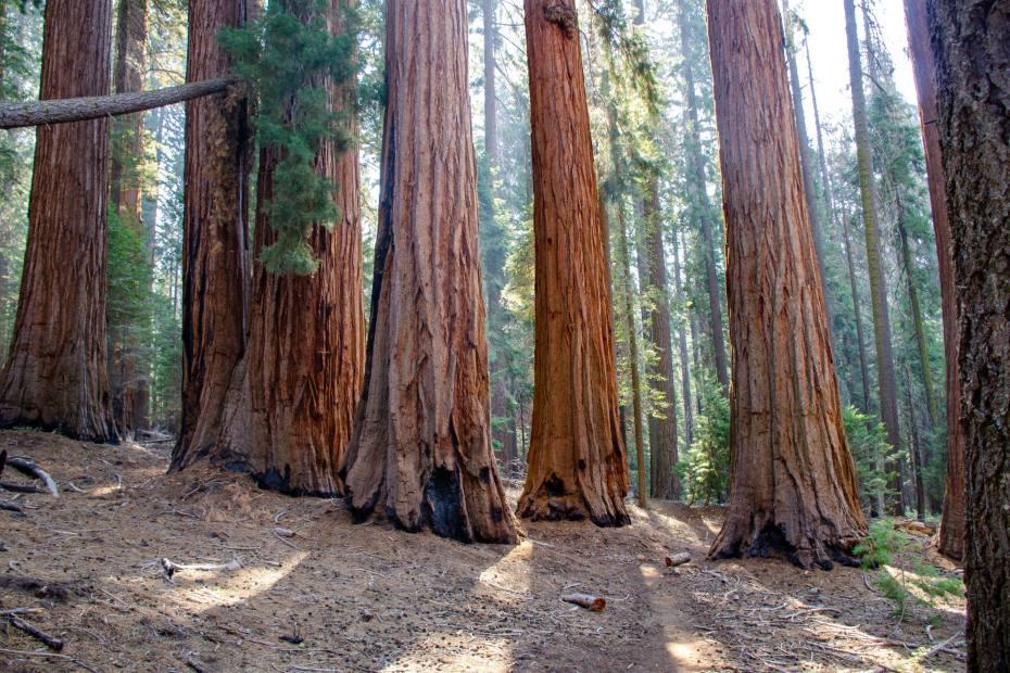 Hiking the Hart Tree Trail at Kings Canyon National Park