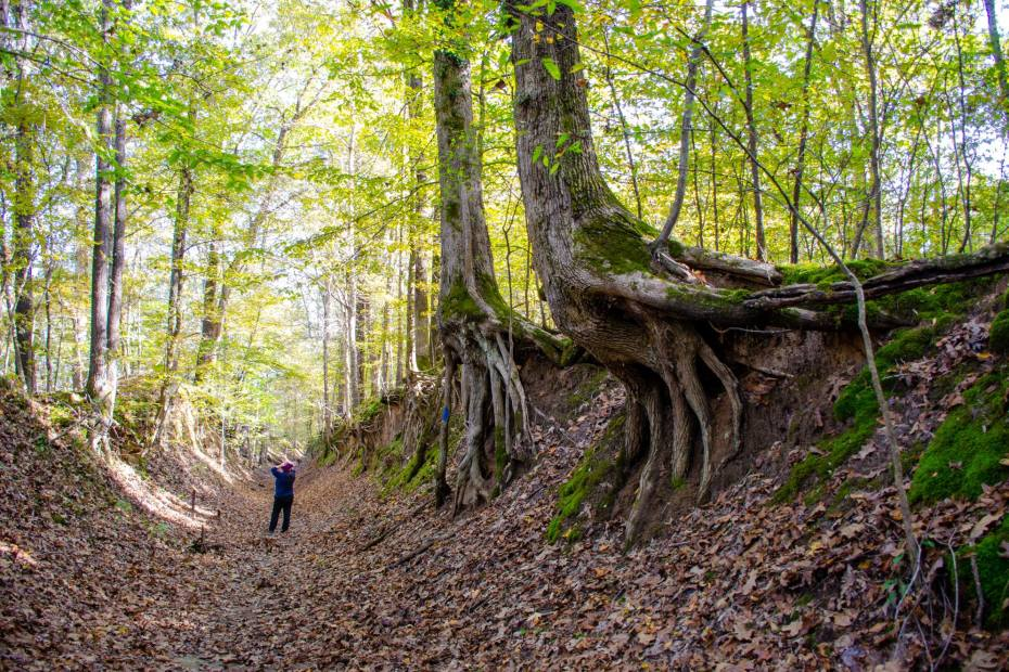 Hiking the Old Military Road Trail at Village Creek State Park