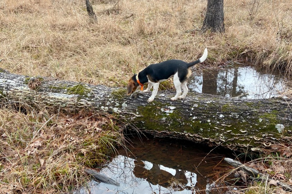 Exploring Arkansas WMA with your dog