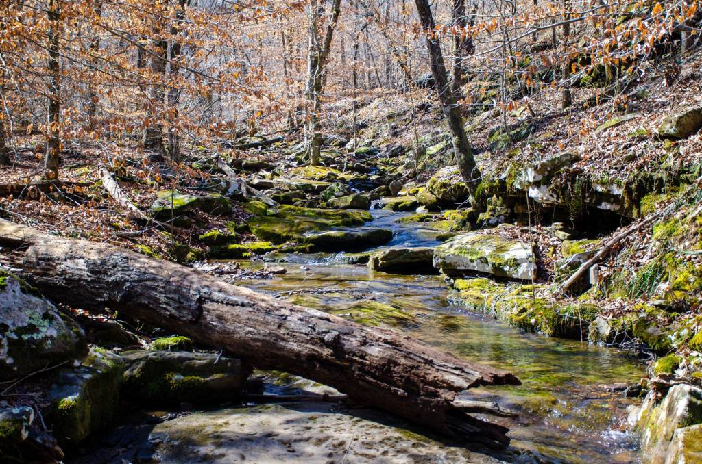 A creek is shown