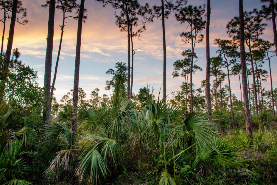 Sun sets at Everglades National Park
