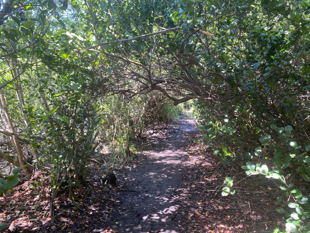 Otter Cave Hammock Trail is shown as part of the Shark Valley Trails Loop
