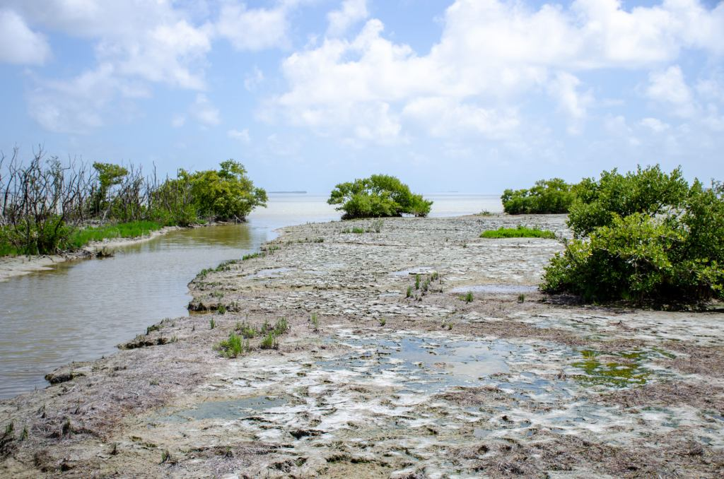 Snake Bight is shown on one of the trails at Everglades National Park