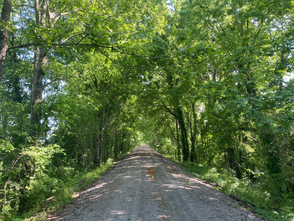 The tunnel of trees is shown from Watson to Rohwer on the Delta Heritage Trail