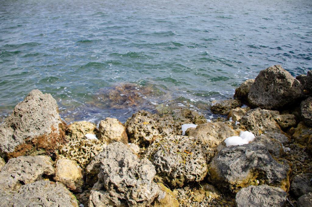 a rocky shoreline is shown