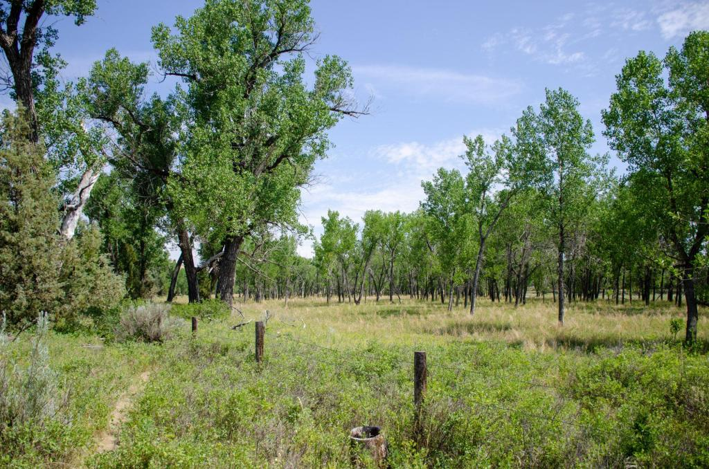 cotton woods and grass are shown at the site of the Elkhorn Ranch Unit