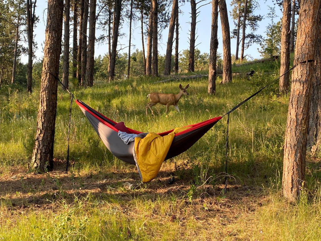 A hammock and deer is shown