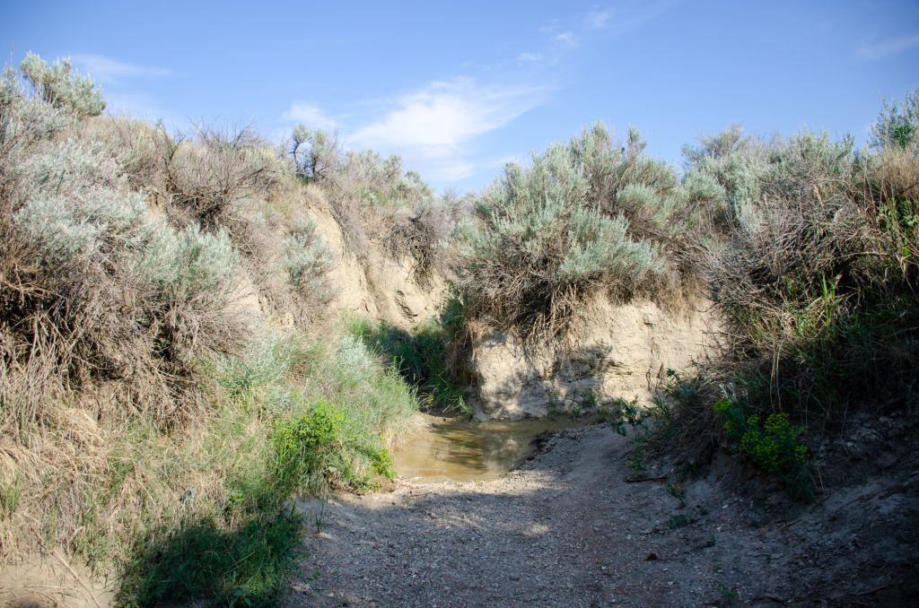The mud hole is shown on the Paintec Canyon Trail at TRNP