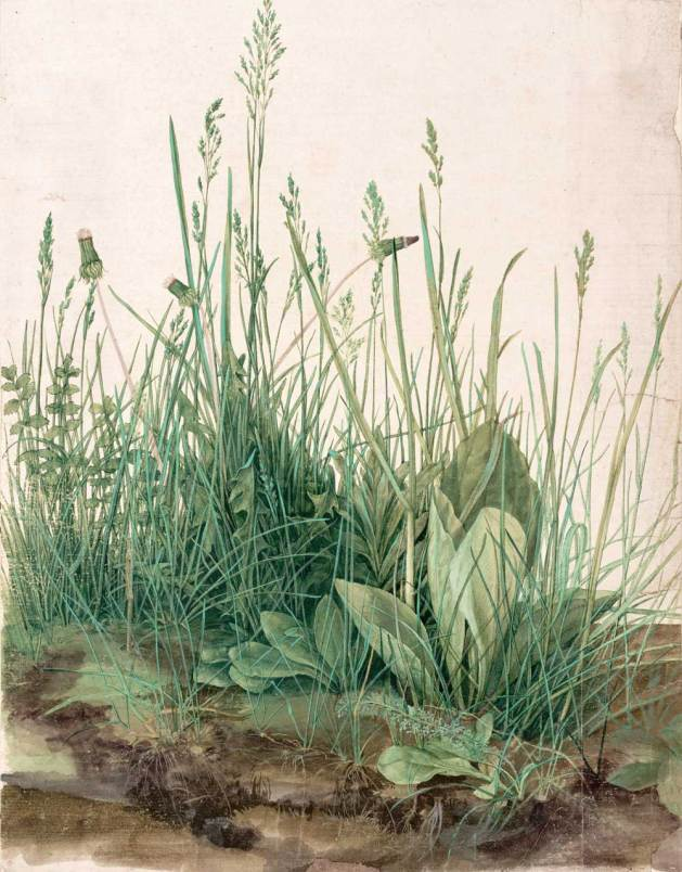 The Great Piece of Turf, 1503, by Albrecht Dürer. Nuremberg. watercolor on paper. Albertina Museum, Vienna.