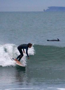 Bryce surfs with dolphin