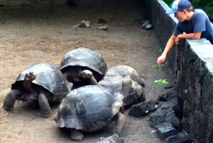 Bryce at Galapagos Tortoise Breeding Center (photo by Leslie)