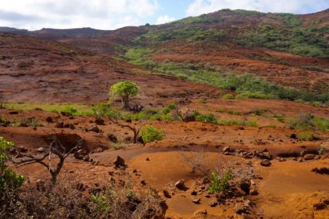 Lone tree in overlooking desolate terrain.