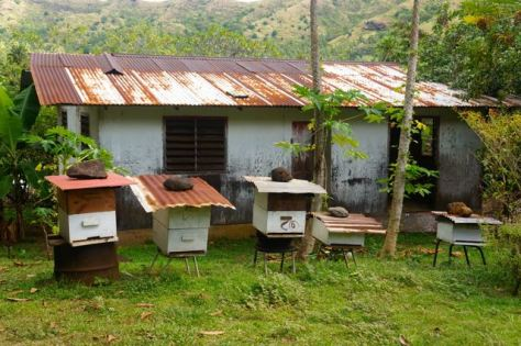 Rustic Marquesan beehives produce exceptional honey, a metaphor for life.
