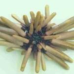Marquesan Pencil Urchin