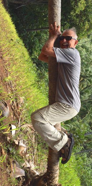 Ron climbing a coconut tree?